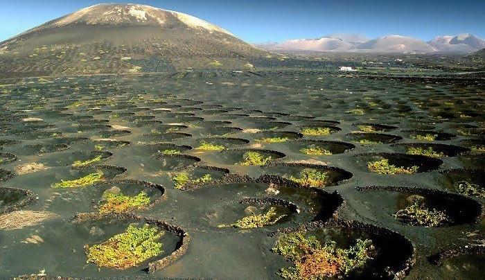 Vinos de Lanzarote, vinos de lava y vida